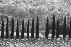 toscane-1086